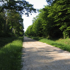 Allée forestière à Saint-Jean Bosjean 236x236
